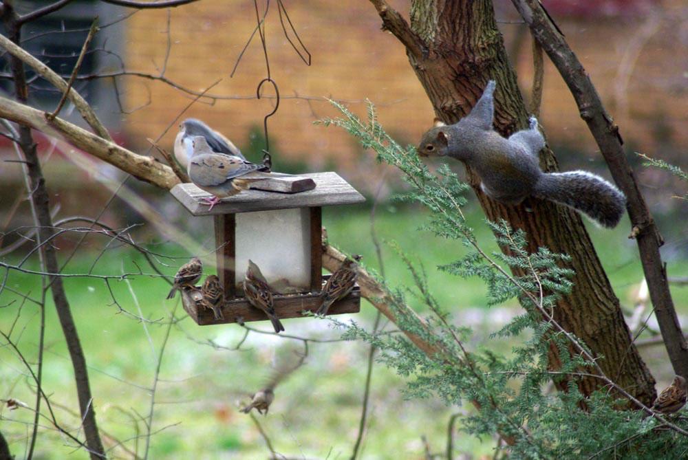 feedthebirds