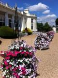 Stoke Park Petunias 1